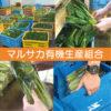 [1]室内軽作業スタッフ [2]野菜栽培・収穫スタッフ