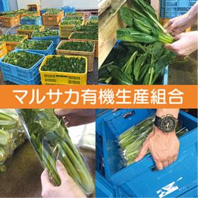 野菜栽培収穫スタッフ