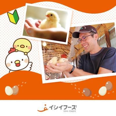 ヒヨコ・ニワトリの飼育スタッフ