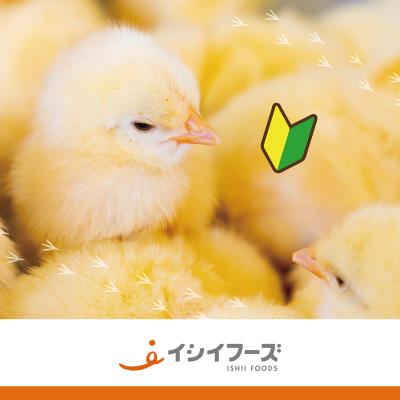 ヒヨコ・ニワトリの飼育管理スタッフ